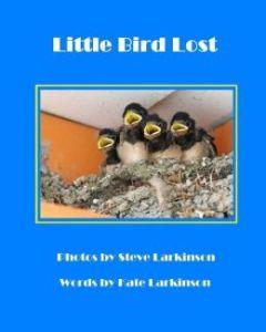 Little Bird Lost9781492762829_p0_v1_s260x420