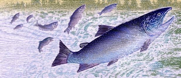 Garland Fish 8-9