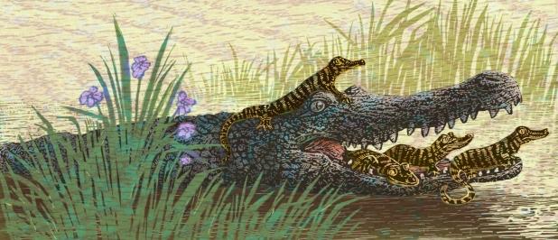 Garland Gator6-7
